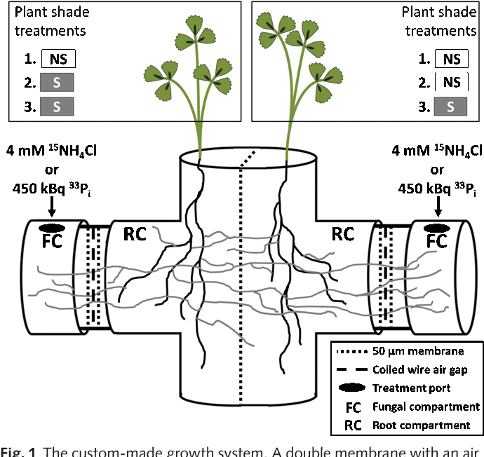 Figure 1 from Fungal nutrient allocation in common