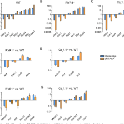 Mouse Skeletal Diagram Universal Motorcycle Ignition Switch Wiring Figure 8 From Distinct Transcriptomic Changes In E14 5 Muscle Lacking Ryr1 Or Cav1 1 Converge At E18