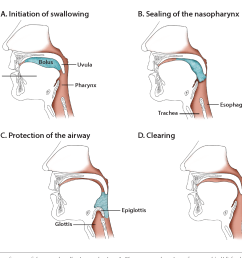 salient features of the normal swallowing mechanism a the transported portions [ 1252 x 1096 Pixel ]