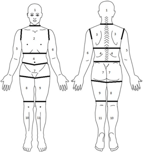 small resolution of diagram of body segmented into regions for assessment of pain