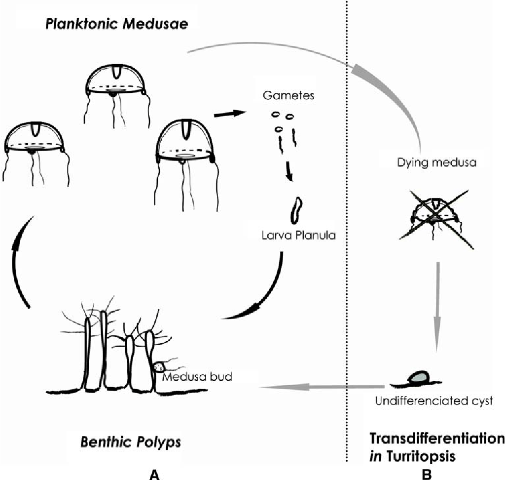 Figure 1 From A Silent Invasion