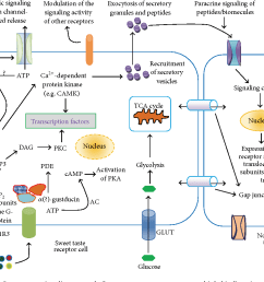 figure 1 a general model of sweet taste signaling network sweet taste receptors possess [ 1252 x 896 Pixel ]