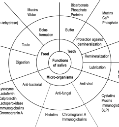 figure 1 schematic presentation of the main functions of saliva in relation to its constituents [ 1380 x 1006 Pixel ]