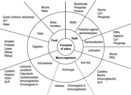 small resolution of figure 1 schematic presentation of the main functions of saliva in relation to its constituents
