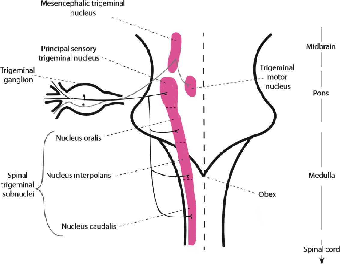 figure 1 5 from