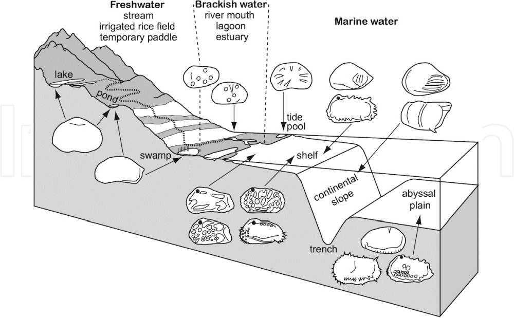medium resolution of schematic hypothetical profile of terrestrial aquatic to abyssal habitats of living ostracods progressing