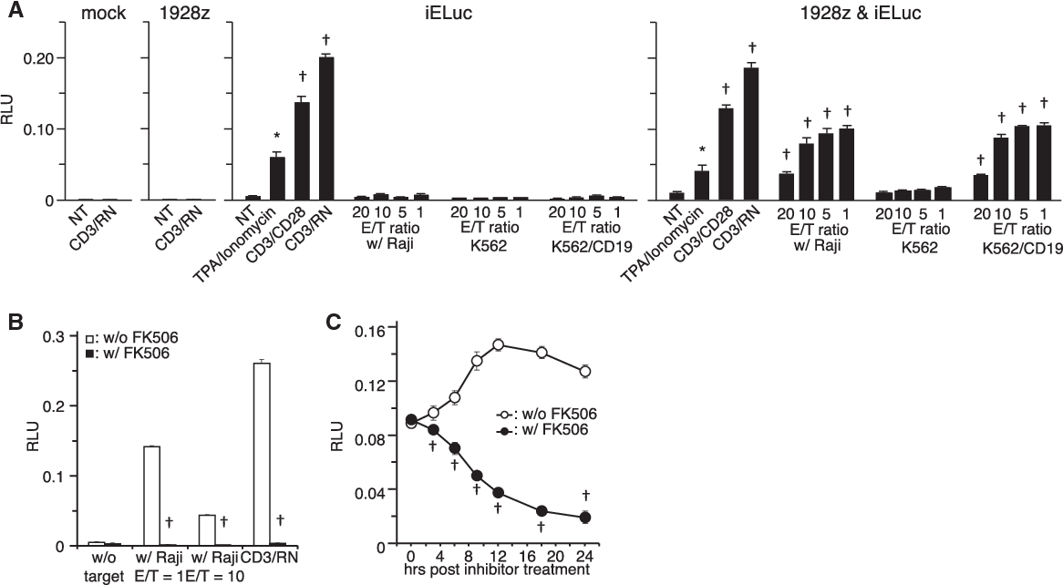 Figure 4 from Functional Analysis of an Inducible Promoter