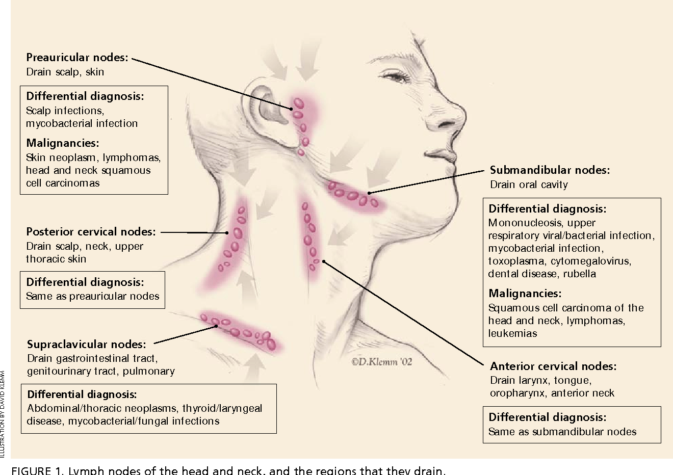 hight resolution of lymph nodes of the head and neck and the regions that they