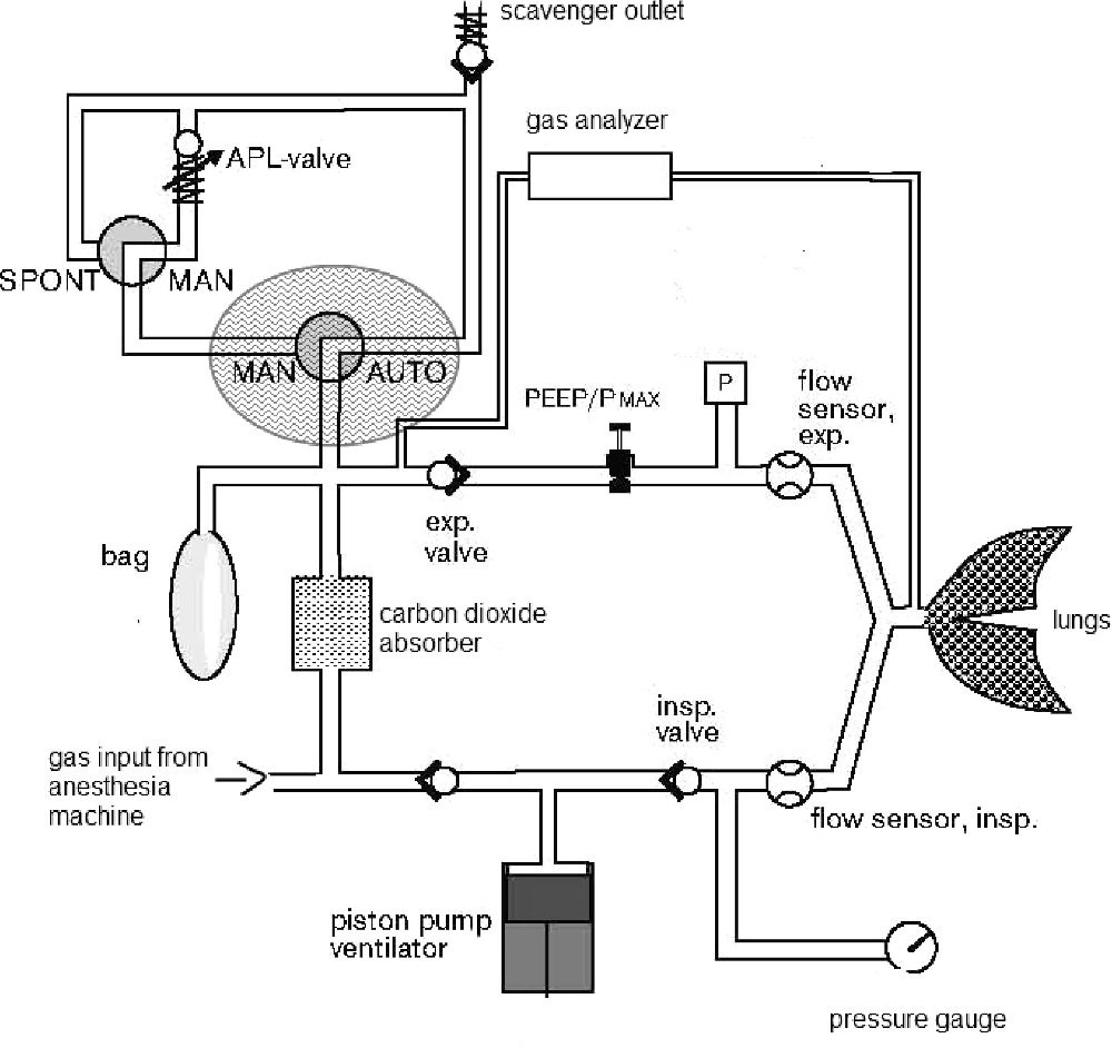 medium resolution of gas flow diagram dr ger apollo anesthesia workstation modified from an