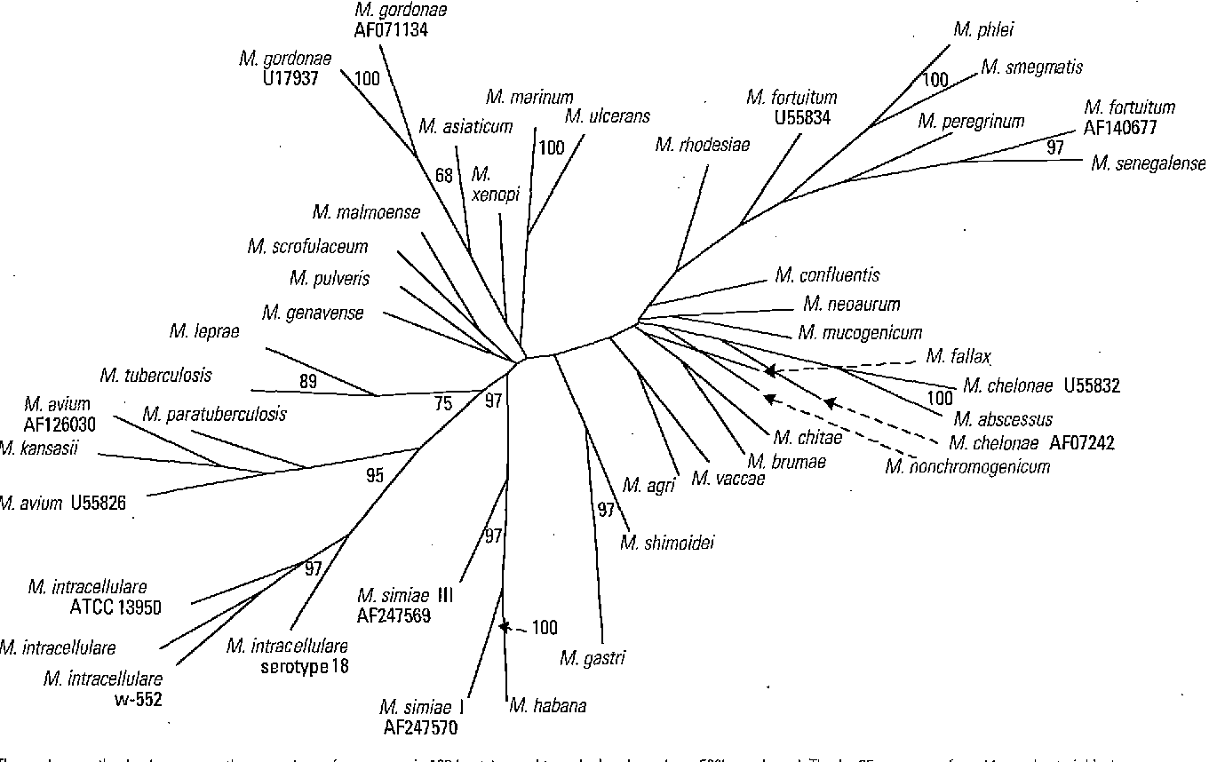 Figure 5 from The mycobacteria: an introduction to