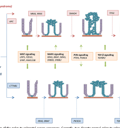 figure 1 schematic diagram of the polyp to colorectal cancer sequences currently two discrete [ 1358 x 934 Pixel ]