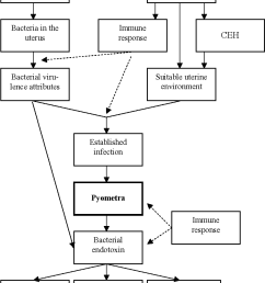 conceptual and generalised model of factors involved in the pathogenesis of canine [ 814 x 1052 Pixel ]