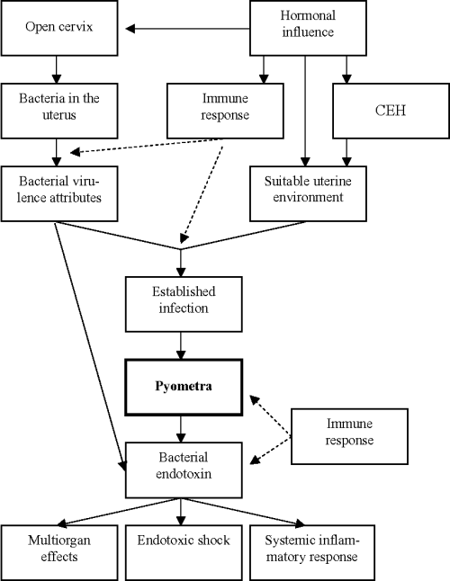 small resolution of conceptual and generalised model of factors involved in the pathogenesis of canine
