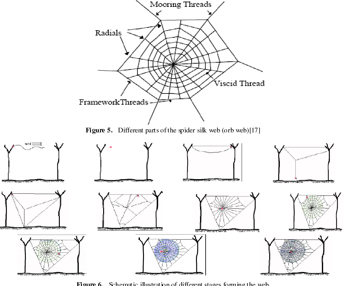 Figure 5 From Spinning And Applications Of Spider Silk