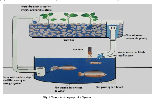 small resolution of 1 traditional aquaponics system