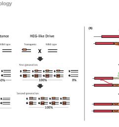 mendelian inheritance 2 td diff versus genetic drive a [ 1358 x 868 Pixel ]