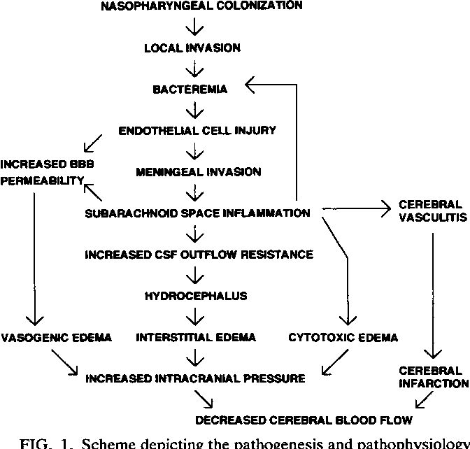 Figure 1 from Pathogenesis and pathophysiology of