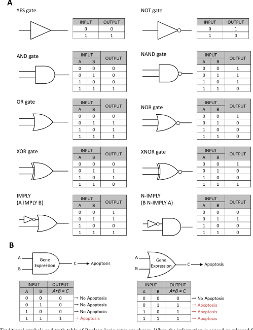 small resolution of  a traditional symbols and truth table of boolean logic gates are