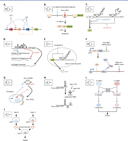 small resolution of  a schematic diagram of representative network plasmid based logic device