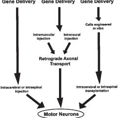 In Vivo Gene Therapy Diagram 2009 Ford Fusion Stereo Wiring Figure 1 From Based Treatment Of Motor Neuron Diseases Schematic Showing Methods For Therapies Therapeutic