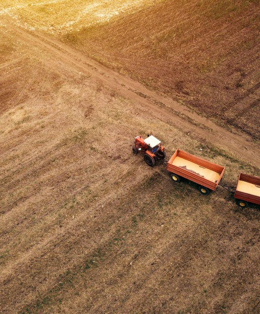 Aerial view of agricultural tractor with trailers in cultivated corn crop field during harvest season from drone pov