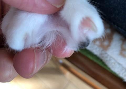 猫の手の水かき