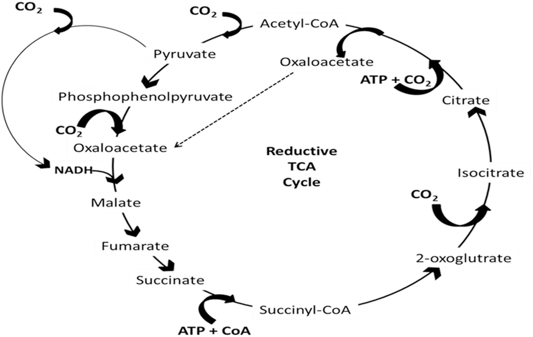 A Review On Biological Systems For Co2 Sequestration