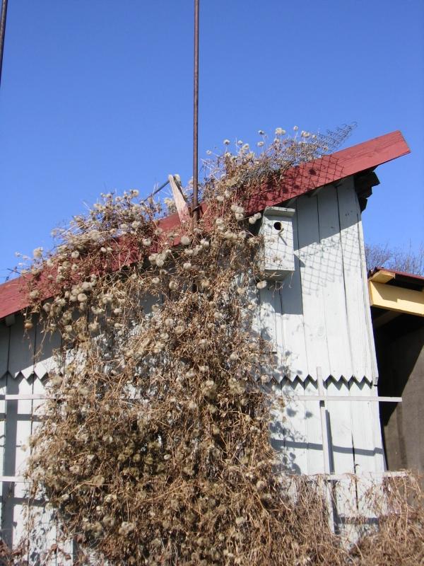 marts-31-kodu-ootab-oma-kuldnokka