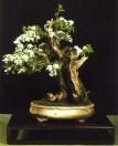 Prunus mahaleb - Thierry Font (França)