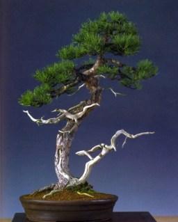 2˚prêmio (Tamanho grande) - Walter Pall - Moyogi 71cm