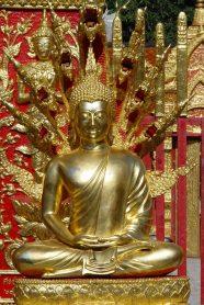 buddha-wings