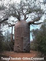 baobab-teapot-ifaty-1