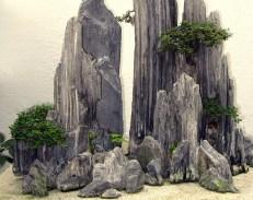 Bonsaï & Penjing - Rockspray cotoneaster - Cotoneaster microphyl