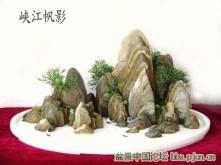 Landscape Bonsai tree