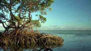 arvore-mangue-ponta-castelhano-low