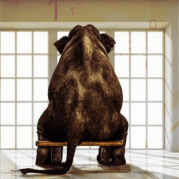 Elephant sitting on a bench - data is the challenge for AI