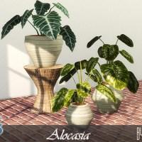 Комнатные растения для The Sims 4.