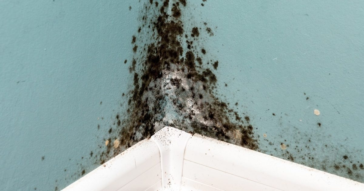 What Eliminates Mold And Mildew Bleach Vs Vinegar Koloa Missionary Church