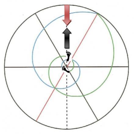 """La posición """"hanmi"""" no es más que un ajuste de """"roppo"""" en el que el pie adelantado apunta directamente al frente."""