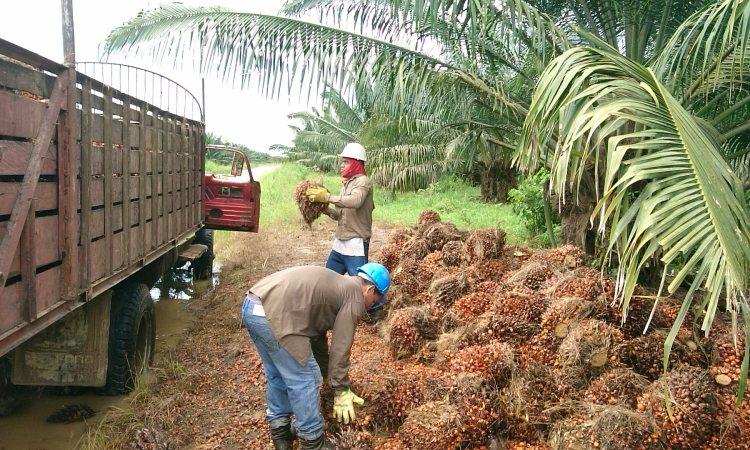 industria de aceite de palma en Colombia