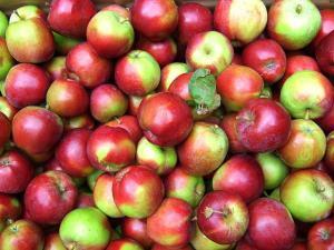 10 Delicious Apple Recipes for Autumn