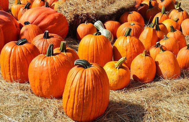 Celebrate Autumn! 8 Fall Family traditions to start this year!