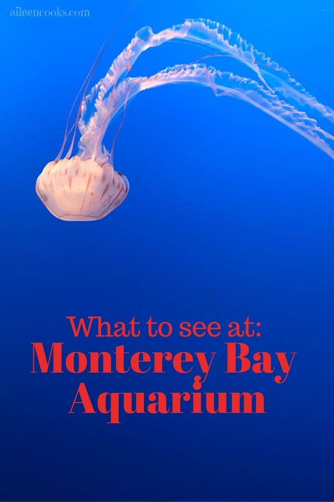 A jelly fish in blue water at Monterey Bay Aquarium.