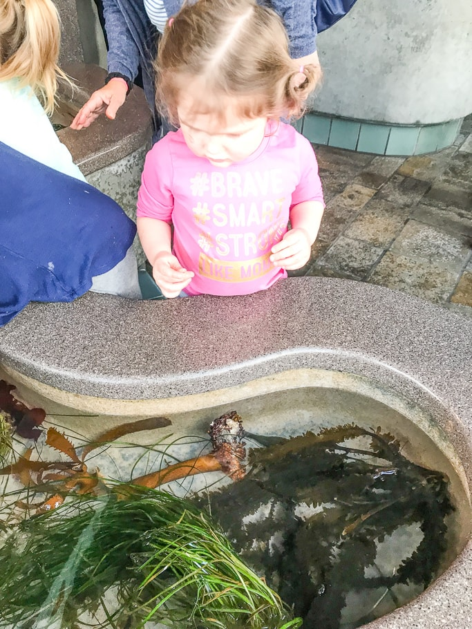 A little girl looking into the tide pool at Monterey Bay Aquarium.