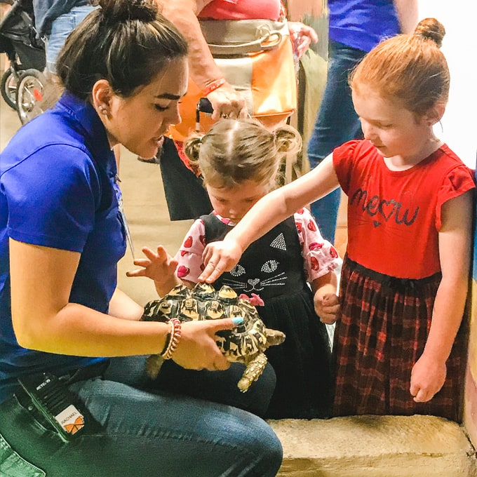 Two little girls petting a tortoise.