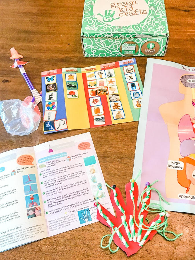 All of the completed projects from the Green Kid Crafts Human Body Lab.