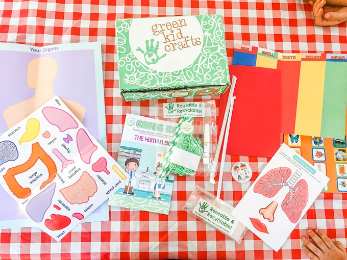 All of the materials for the green kid crafts human body lab on a red and white checkered tablecloth.