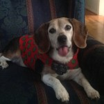 Charlie Beagle finds Shelter from the Storm