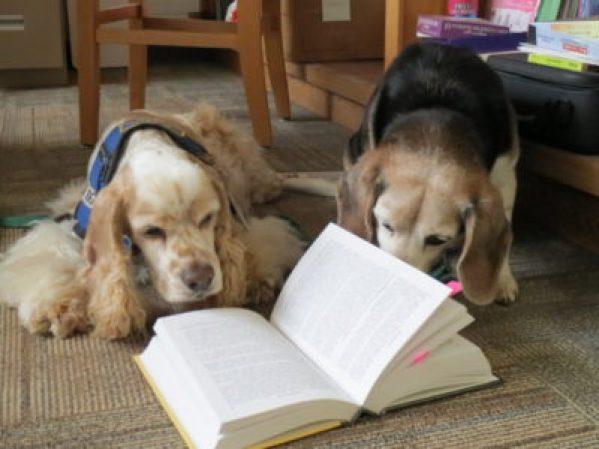 Beagle and Cocker Spaniel