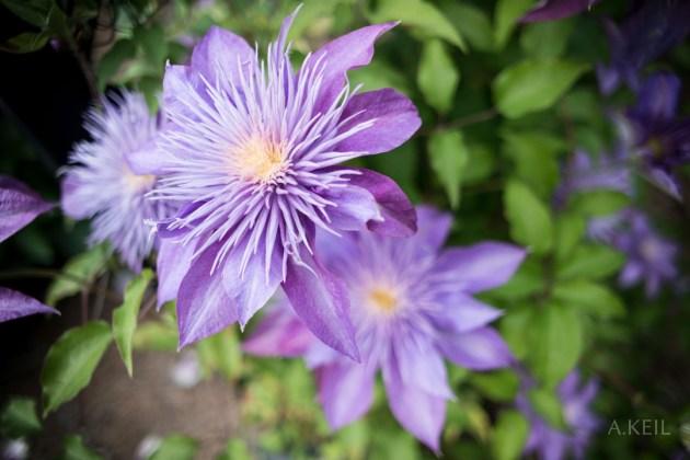 Meadowlark Botanical Gardens Flower 001